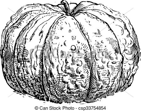 Clipart Vector of Cantaloupe or Cucumis melo var. cantalupensis.