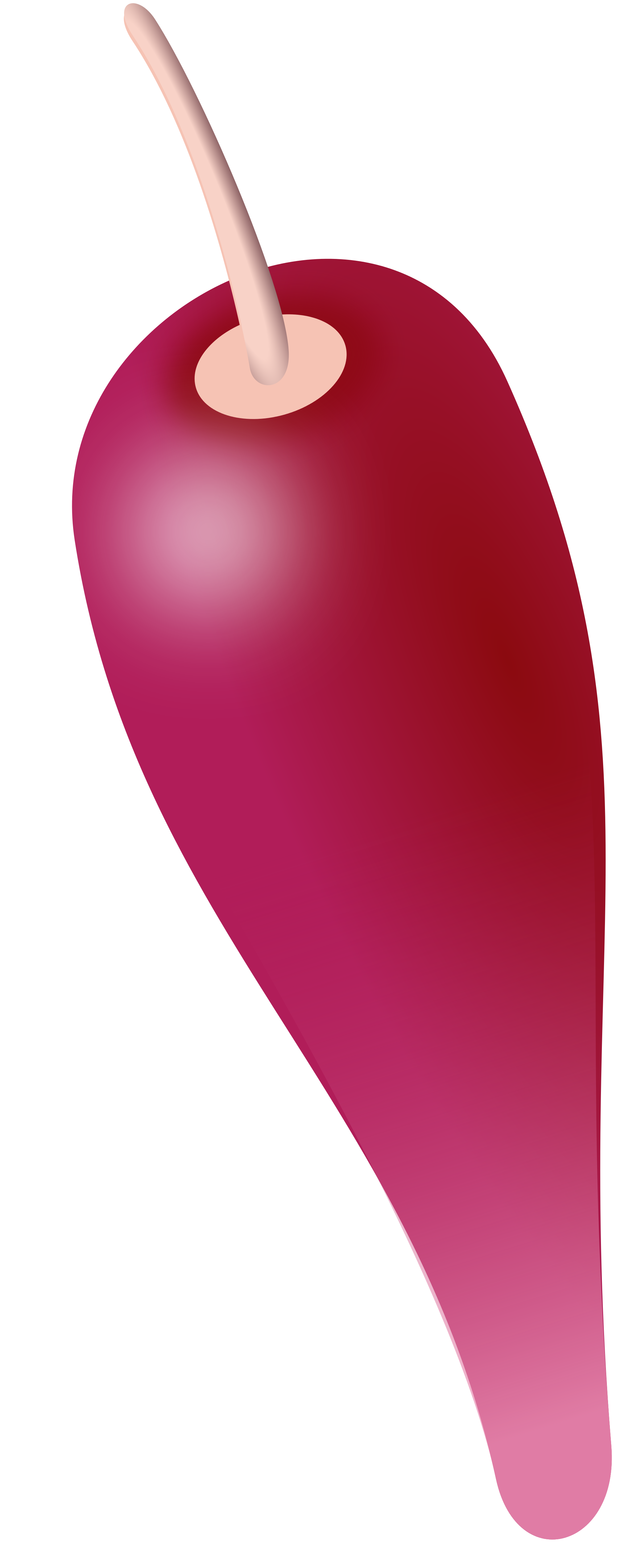 File:Melocactus curvispinus fruit.svg.
