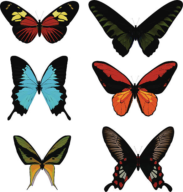 Heliconius Melpomene Clip Art, Vector Images & Illustrations.