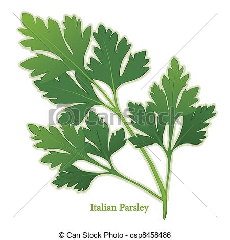 Clip Art Vector of Italian Parsley Herb.