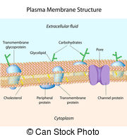 Membrane Illustrations and Clip Art. 2,735 Membrane royalty free.