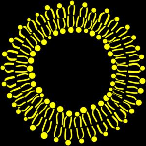 Membrane Clipart.