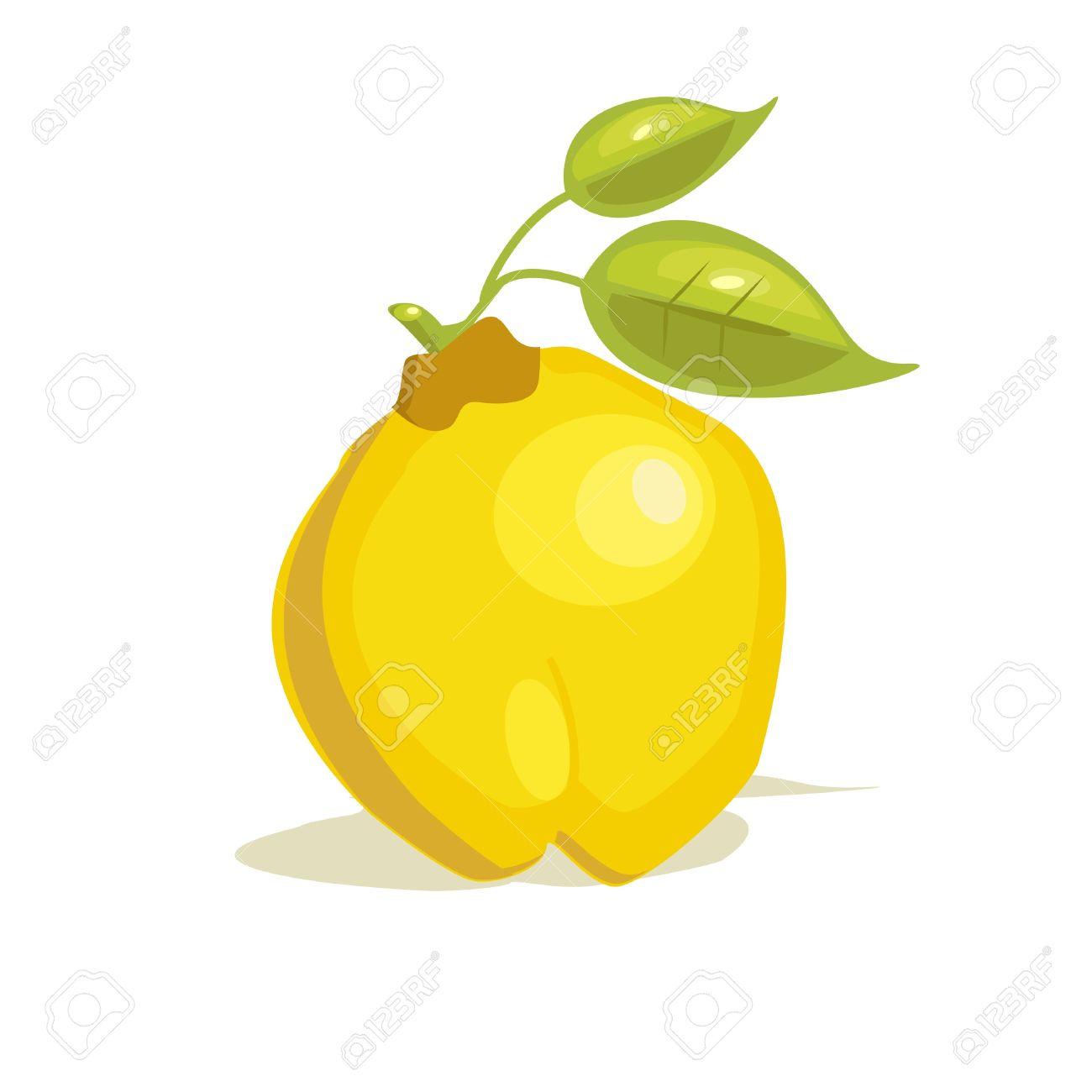 fruit clipart quince fruit