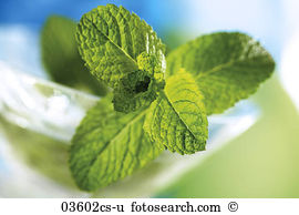 Mentha Images and Stock Photos. 3,138 mentha photography and.