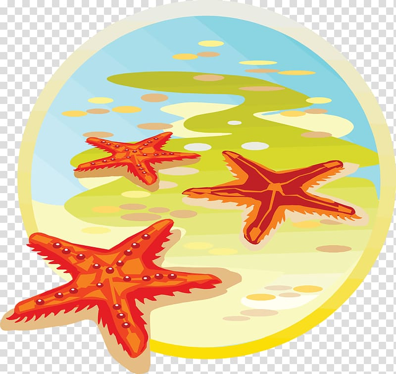 Starfish Sea Classe de mer , starfish transparent background.