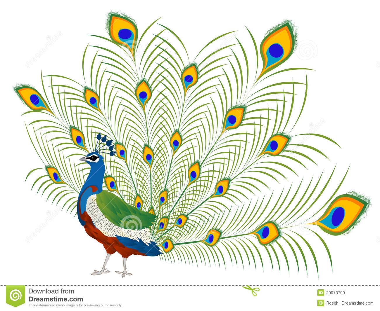 Peacock Royalty Free Stock Photos.