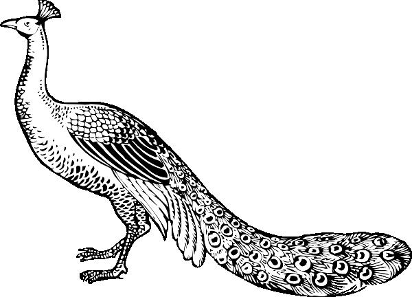 Peacock Clip Art at Clker.com.