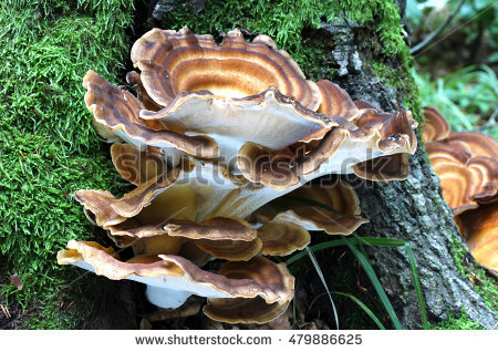 Mushroom Spawn Stock Photos, Royalty.