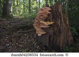 Polypore Images and Stock Photos. 451 polypore photography and.