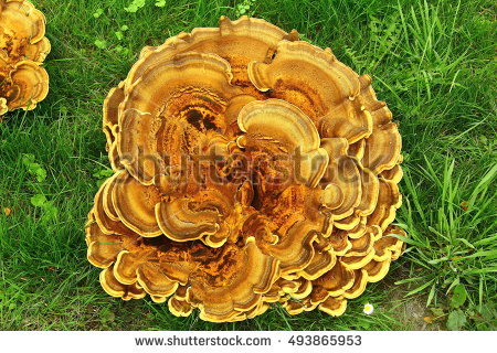 Polypore Stock Photos, Royalty.