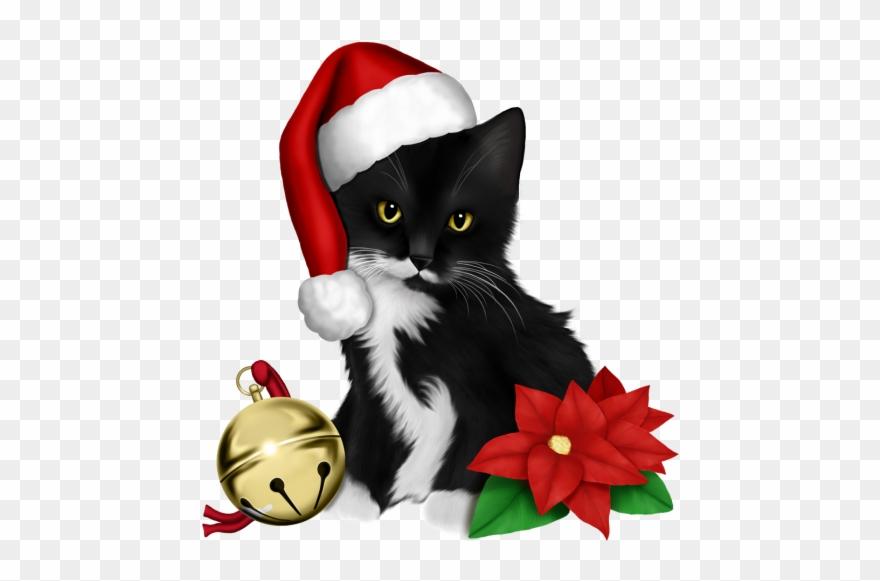Christmas And New Year, Christmas Cats, Merry Christmas.