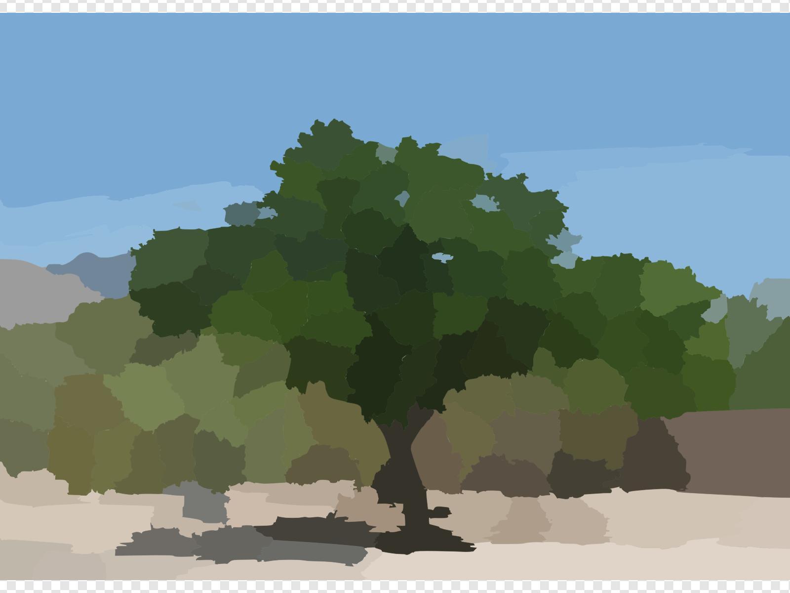 A Mesquite Tree In The Binghampton Cemetery Clip art, Icon.