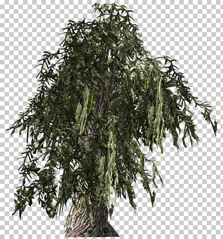 Fallout: New Vegas Prosopis glandulosa Tree Fallout 4.