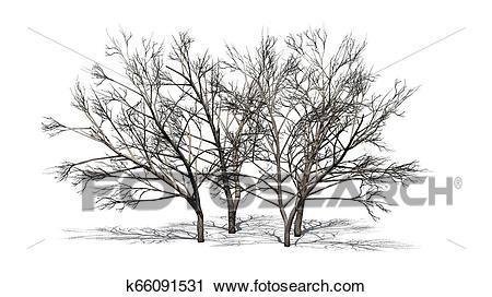 Various Honey Mesquite trees in winter with shadow on the floor Clip Art.