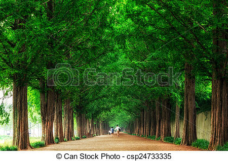 Stock Photos of Lovers walking down metasequoia road.
