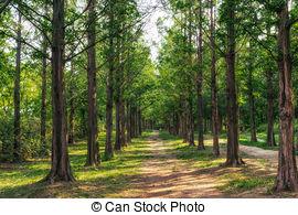 Stock Photo of metasequoia road in seoul.