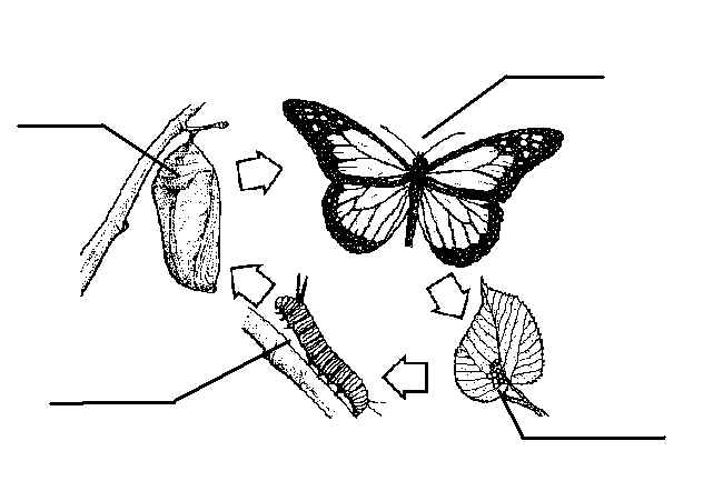 BE AN EXPERT: Insect Study.