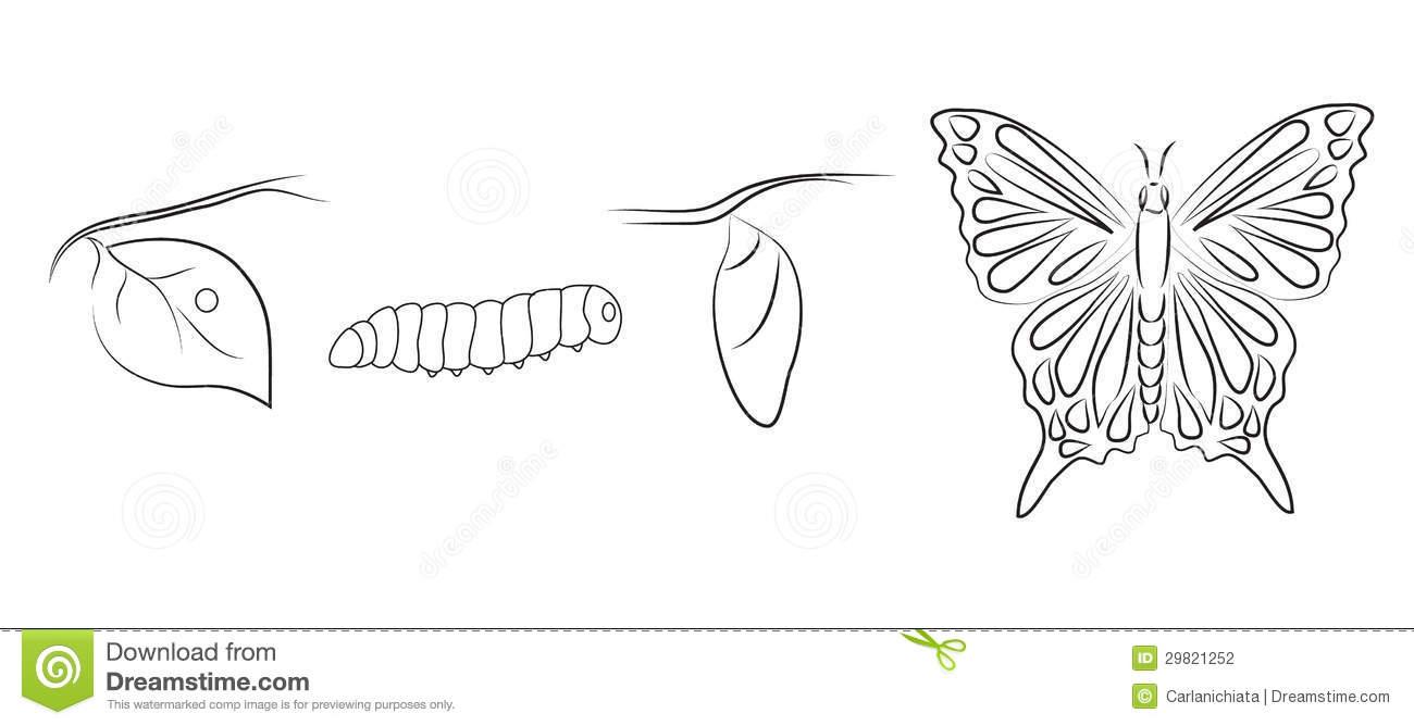 Metamorphosis Stock Illustrations.
