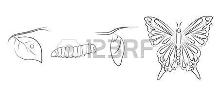 211 Metamorphosis Butterfly Cliparts, Stock Vector And Royalty.