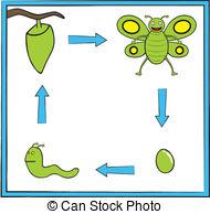 Metamorphosis Clip Art Vector and Illustration. 219 Metamorphosis.