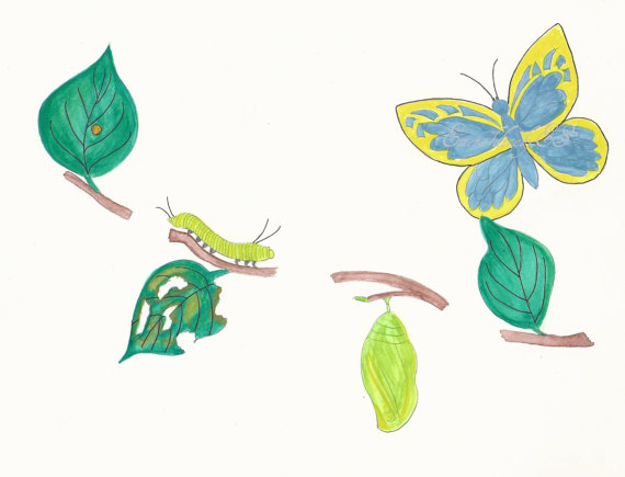 Butterfly metamorphosis including egg caterpillar cocoon and.