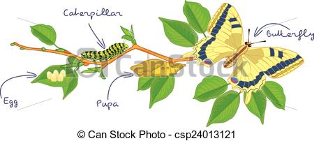 Vector Illustration of The metamorphosis of the butterfly ( egg.