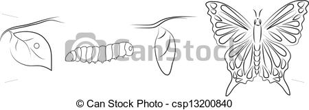 EPS Vector of Metamorphosis of a butterfly csp13200840.