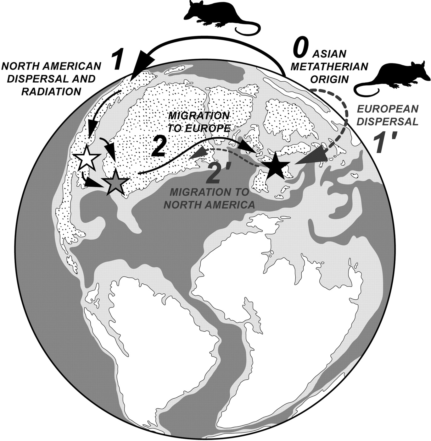 The oldest modern therian mammal from Europe and its bearing on.