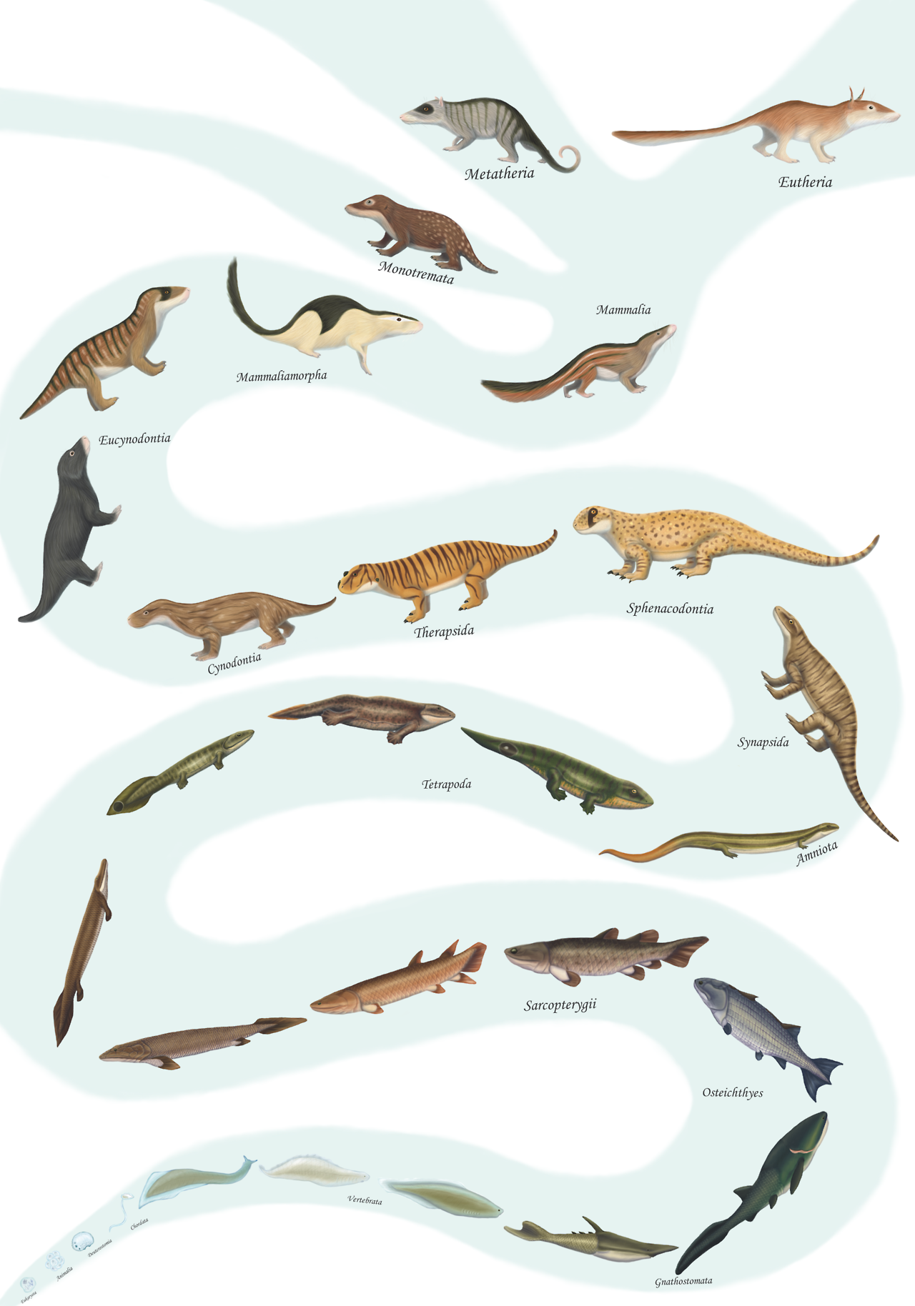 mammal evolution.