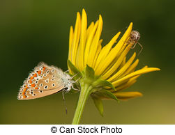 Stock Photos of Metellina segmentata. Spider on the bush.