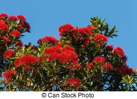 Stock Photographs of Flowers of the Pohutukawa Tree (Metrosideros.