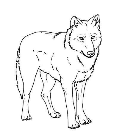 1000+ images about wolves on Pinterest.