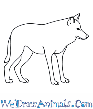 How to Draw a Mexican Wolf.