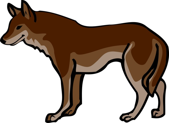 Mexican Wolf Clipart Clipground