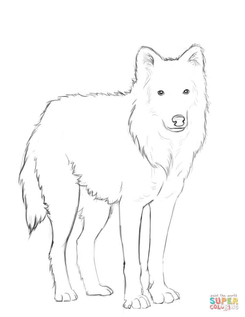 gray wolf coloring pages - photo#23