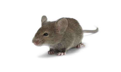 Mice Png (108+ images in Collection) Page 3.