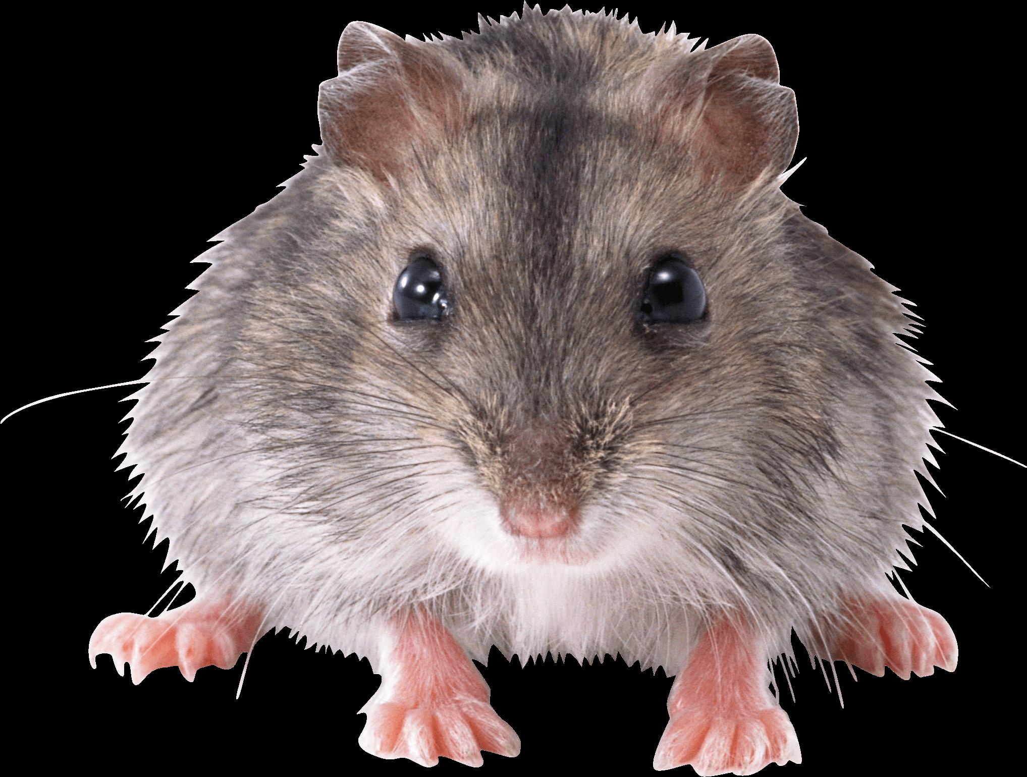 Mouse Front transparent PNG.