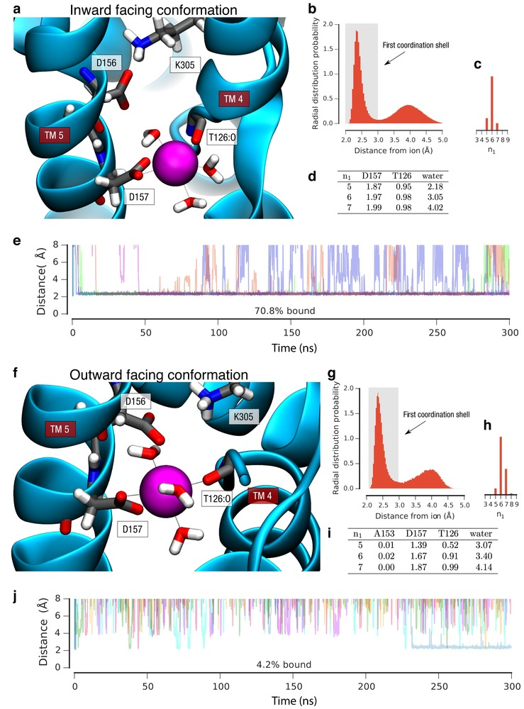 Crystal structures reveal the molecular basis of ion translocation.