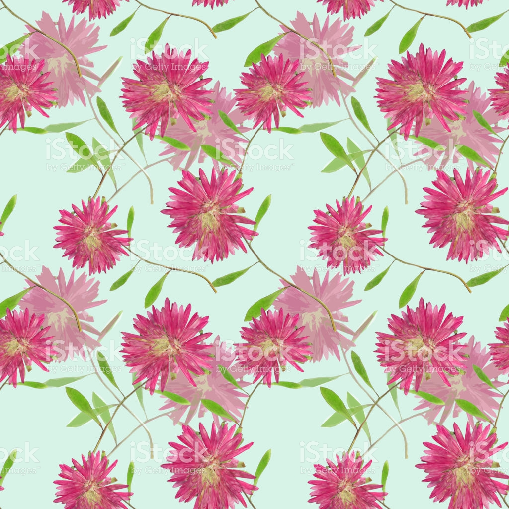 Aster Michaelmas Daisy Seamless Pattern Texture Of Pressed Dry.