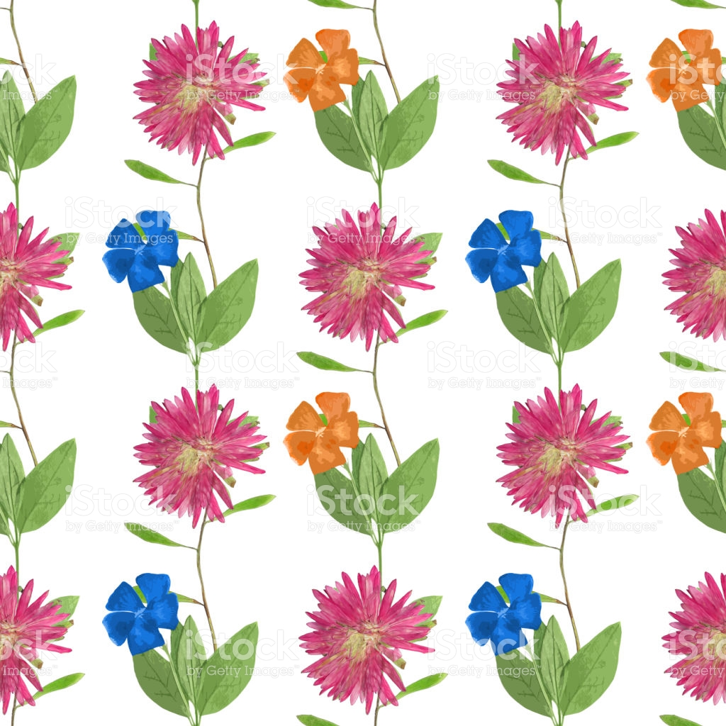Aster Michaelmas Daisy Periwinkle Seamless Pattern For Continuous.