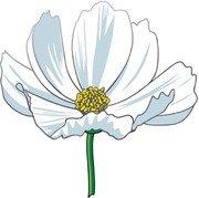 Michaelmas Daisy Clip Art, Vector Michaelmas Daisy.