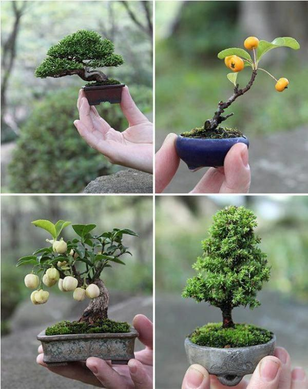 1000+ images about Miniatures.