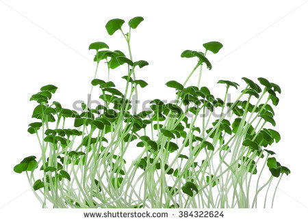 Microgreens Stock Photos, Royalty.