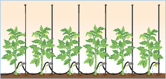 How to Choose a Watering System or Garden Irrigation System.