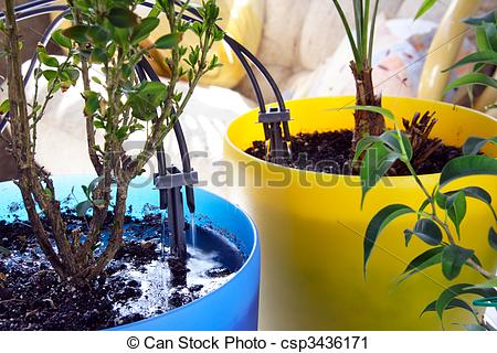 Stock Photography of Micro Irrigation System for Home Plants.