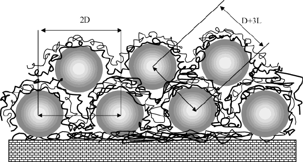 Microstructure of the film composed of two gold nanoparticle.