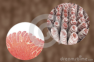 Microphotograph Stock Illustrations.