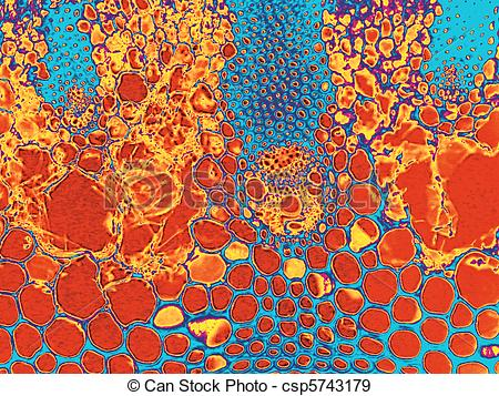 Stock Photographs of Stained Photomicrograph.
