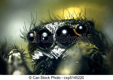 Stock Photography of Jumping Spider Microphotograph taken at 40X.