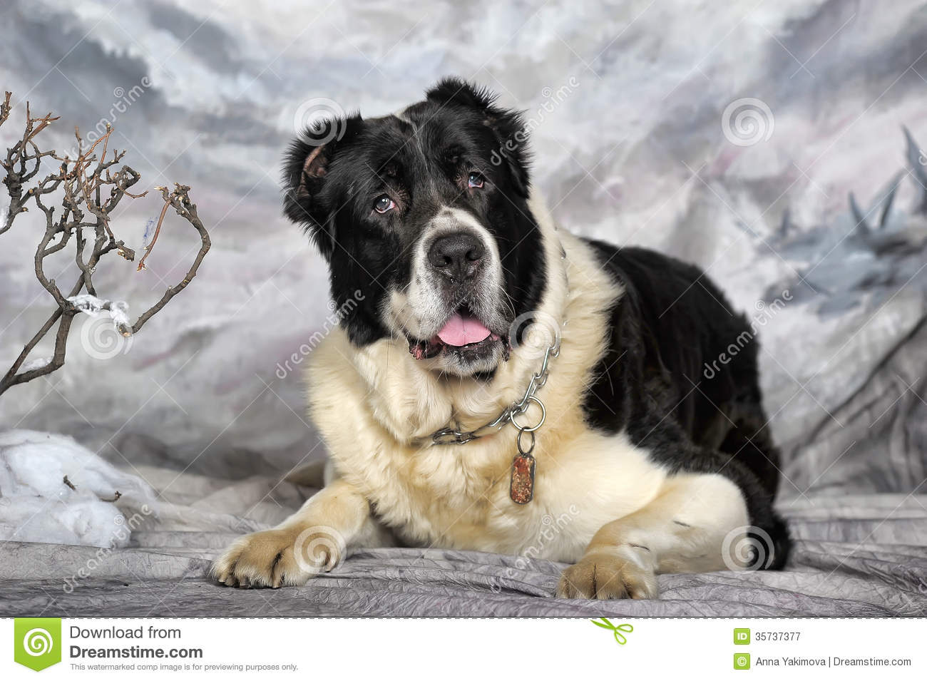 Central Asian Shepherd Dog Royalty Free Stock Photography.